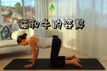 初級瑜珈課程 — 貓和牛